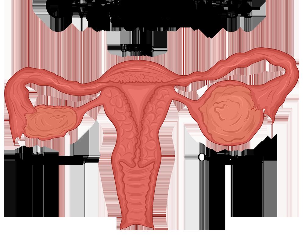 ovarian-cysts-diagram-AdobeStock_169410300-3 - Cherokee Women's Health